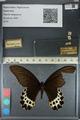 http://mczbase.mcz.harvard.edu/specimen_images/ent-lepidoptera/images/2012_08_29/IMG_127430.JPG