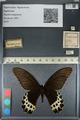 http://mczbase.mcz.harvard.edu/specimen_images/ent-lepidoptera/images/2012_08_29/IMG_127432.JPG