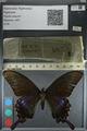 http://mczbase.mcz.harvard.edu/specimen_images/ent-lepidoptera/images/2012_09_06/IMG_127819.JPG