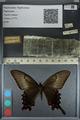 http://mczbase.mcz.harvard.edu/specimen_images/ent-lepidoptera/images/2012_09_06/IMG_127839.JPG
