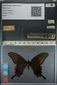 http://mczbase.mcz.harvard.edu/specimen_images/ent-lepidoptera/images/2012_09_06/IMG_127840.JPG