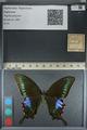 http://mczbase.mcz.harvard.edu/specimen_images/ent-lepidoptera/images/2012_09_06/IMG_127868.JPG