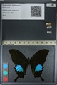 http://mczbase.mcz.harvard.edu/specimen_images/ent-lepidoptera/images/2012_09_08/IMG_127940.JPG