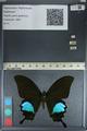 http://mczbase.mcz.harvard.edu/specimen_images/ent-lepidoptera/images/2012_09_08/IMG_127942.JPG