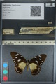 http://mczbase.mcz.harvard.edu/specimen_images/ent-lepidoptera/images/2012_09_08/IMG_128172.JPG