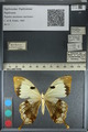 http://mczbase.mcz.harvard.edu/specimen_images/ent-lepidoptera/images/2012_09_11/IMG_128209.JPG