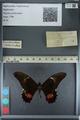 http://mczbase.mcz.harvard.edu/specimen_images/ent-lepidoptera/images/2012_09_15/IMG_128949.JPG