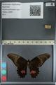 http://mczbase.mcz.harvard.edu/specimen_images/ent-lepidoptera/images/2012_09_16/IMG_129011.JPG