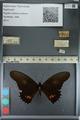 http://mczbase.mcz.harvard.edu/specimen_images/ent-lepidoptera/images/2012_09_16/IMG_129029.JPG