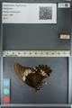 http://mczbase.mcz.harvard.edu/specimen_images/ent-lepidoptera/images/2012_09_17/IMG_129035.JPG