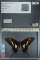 http://mczbase.mcz.harvard.edu/specimen_images/ent-lepidoptera/images/2012_09_17/IMG_129070.JPG