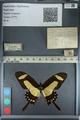 http://mczbase.mcz.harvard.edu/specimen_images/ent-lepidoptera/images/2012_09_17/IMG_129077.JPG