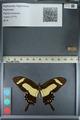 http://mczbase.mcz.harvard.edu/specimen_images/ent-lepidoptera/images/2012_09_17/IMG_129078.JPG