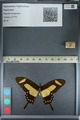 http://mczbase.mcz.harvard.edu/specimen_images/ent-lepidoptera/images/2012_09_17/IMG_129081.JPG