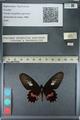 http://mczbase.mcz.harvard.edu/specimen_images/ent-lepidoptera/images/2012_09_24/IMG_129877.JPG