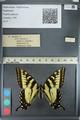 http://mczbase.mcz.harvard.edu/specimen_images/ent-lepidoptera/images/2012_09_28/IMG_130350.JPG