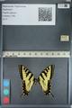 http://mczbase.mcz.harvard.edu/specimen_images/ent-lepidoptera/images/2012_09_28/IMG_130372.JPG