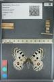 http://mczbase.mcz.harvard.edu/specimen_images/ent-lepidoptera/images/2012_10_10/IMG_131490.JPG