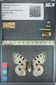 http://mczbase.mcz.harvard.edu/specimen_images/ent-lepidoptera/images/2012_10_10/IMG_131493.JPG