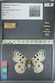 http://mczbase.mcz.harvard.edu/specimen_images/ent-lepidoptera/images/2012_10_10/IMG_131496.JPG