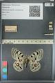 http://mczbase.mcz.harvard.edu/specimen_images/ent-lepidoptera/images/2012_10_11/IMG_131559.JPG