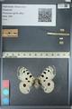 http://mczbase.mcz.harvard.edu/specimen_images/ent-lepidoptera/images/2012_10_12/IMG_131691.JPG