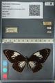 http://mczbase.mcz.harvard.edu/specimen_images/ent-lepidoptera/images/2012_10_25/IMG_133159.JPG