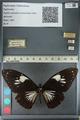 http://mczbase.mcz.harvard.edu/specimen_images/ent-lepidoptera/images/2012_10_25/IMG_133160.JPG