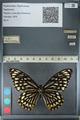 http://mczbase.mcz.harvard.edu/specimen_images/ent-lepidoptera/images/2012_10_26/IMG_133210.JPG