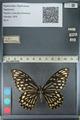 http://mczbase.mcz.harvard.edu/specimen_images/ent-lepidoptera/images/2012_10_26/IMG_133211.JPG