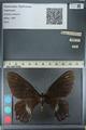 http://mczbase.mcz.harvard.edu/specimen_images/ent-lepidoptera/images/2012_10_26/IMG_133219.JPG