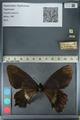 http://mczbase.mcz.harvard.edu/specimen_images/ent-lepidoptera/images/2012_10_26/IMG_133220.JPG