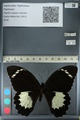 http://mczbase.mcz.harvard.edu/specimen_images/ent-lepidoptera/images/2012_10_26/IMG_133222.JPG