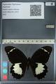 http://mczbase.mcz.harvard.edu/specimen_images/ent-lepidoptera/images/2012_10_26/IMG_133223.JPG