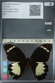 http://mczbase.mcz.harvard.edu/specimen_images/ent-lepidoptera/images/2012_10_26/IMG_133224.JPG