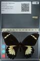 http://mczbase.mcz.harvard.edu/specimen_images/ent-lepidoptera/images/2012_10_26/IMG_133225.JPG