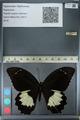 http://mczbase.mcz.harvard.edu/specimen_images/ent-lepidoptera/images/2012_10_26/IMG_133227.JPG