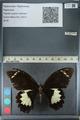 http://mczbase.mcz.harvard.edu/specimen_images/ent-lepidoptera/images/2012_10_26/IMG_133228.JPG
