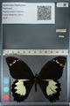 http://mczbase.mcz.harvard.edu/specimen_images/ent-lepidoptera/images/2012_10_26/IMG_133229.JPG