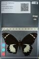 http://mczbase.mcz.harvard.edu/specimen_images/ent-lepidoptera/images/2012_10_26/IMG_133231.JPG