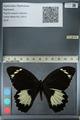 http://mczbase.mcz.harvard.edu/specimen_images/ent-lepidoptera/images/2012_10_26/IMG_133232.JPG