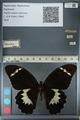 http://mczbase.mcz.harvard.edu/specimen_images/ent-lepidoptera/images/2012_10_26/IMG_133234.JPG