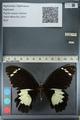 http://mczbase.mcz.harvard.edu/specimen_images/ent-lepidoptera/images/2012_10_26/IMG_133241.JPG