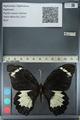 http://mczbase.mcz.harvard.edu/specimen_images/ent-lepidoptera/images/2012_10_26/IMG_133242.JPG