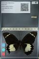 http://mczbase.mcz.harvard.edu/specimen_images/ent-lepidoptera/images/2012_10_26/IMG_133243.JPG