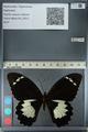http://mczbase.mcz.harvard.edu/specimen_images/ent-lepidoptera/images/2012_10_26/IMG_133248.JPG