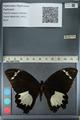 http://mczbase.mcz.harvard.edu/specimen_images/ent-lepidoptera/images/2012_10_26/IMG_133251.JPG