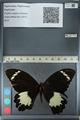 http://mczbase.mcz.harvard.edu/specimen_images/ent-lepidoptera/images/2012_10_26/IMG_133252.JPG
