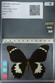 http://mczbase.mcz.harvard.edu/specimen_images/ent-lepidoptera/images/2012_10_26/IMG_133260.JPG