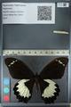 http://mczbase.mcz.harvard.edu/specimen_images/ent-lepidoptera/images/2012_10_26/IMG_133266.JPG